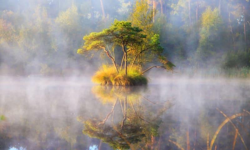 herfst in de Oisterwijkse bossen
