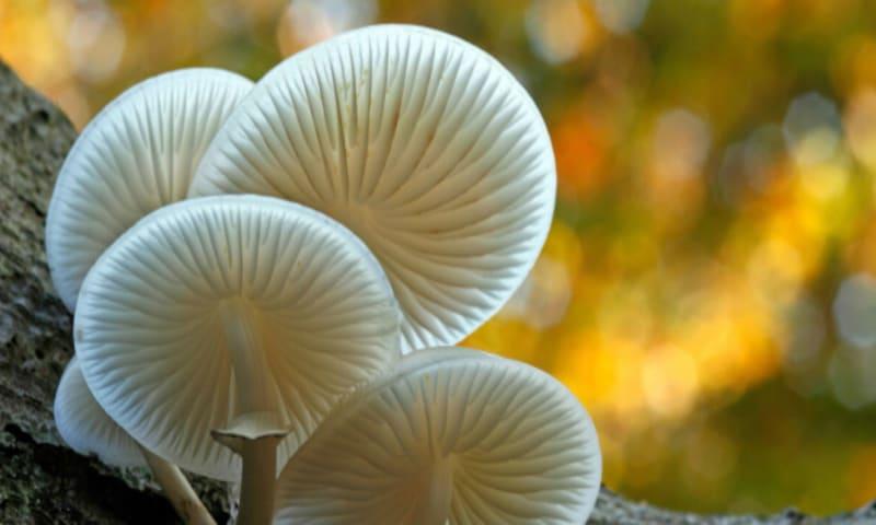 290 download - nm - paddenstoelenroute email