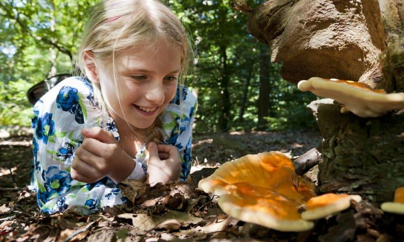 OERRR Op zoek naar paddenstoelen