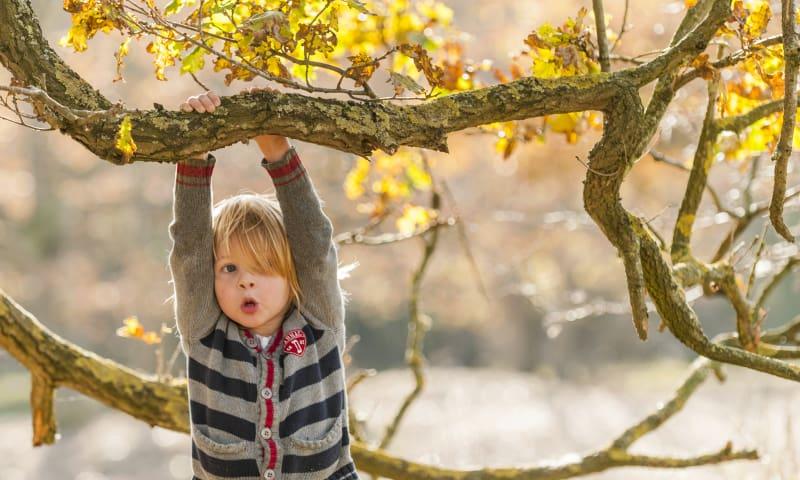 jongen in boom