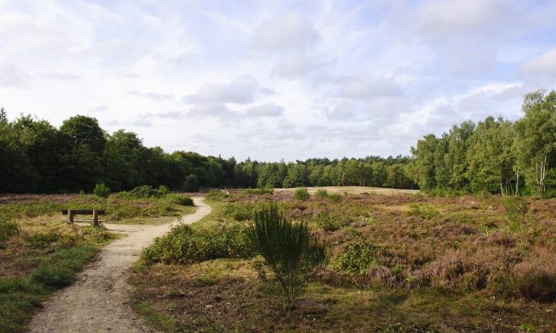 Heide bij Helenaheuvel
