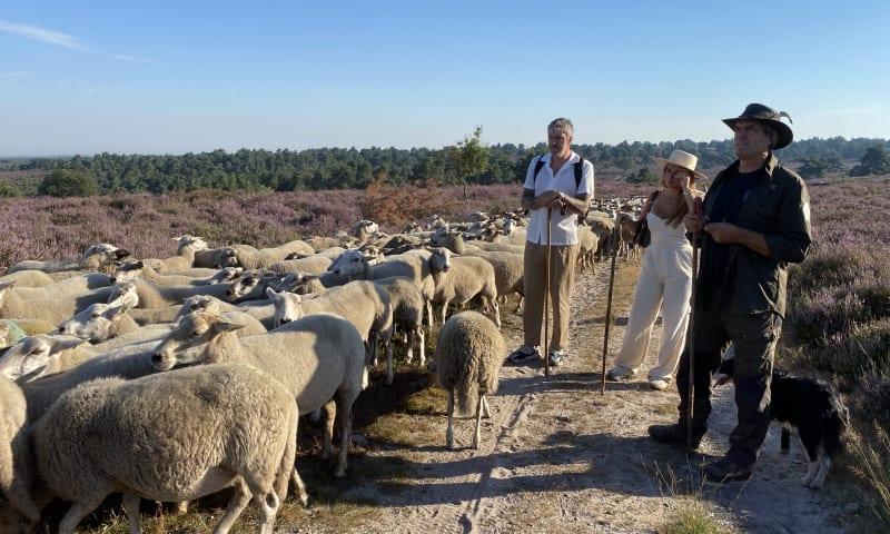Ruud de Wild en Olcay Gulsen met herder Wim Schraven De Sprengenberg
