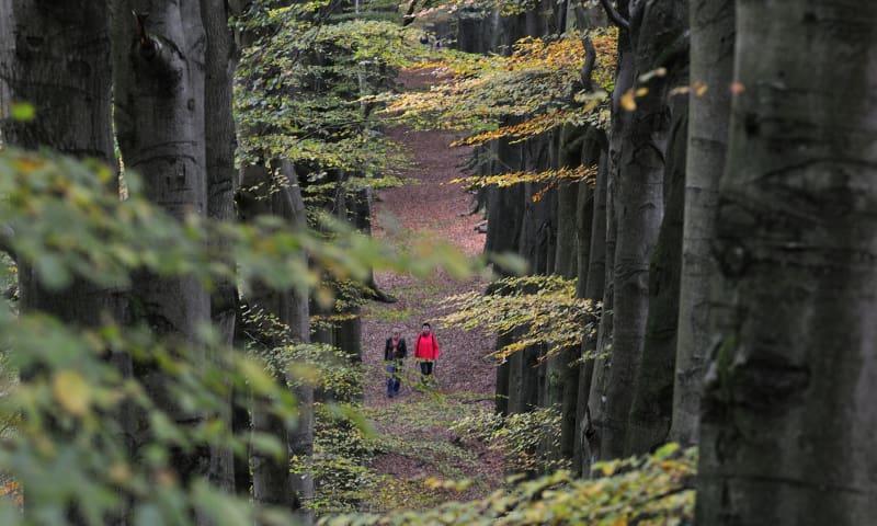 NS-wandeling Veluwezoom herfst