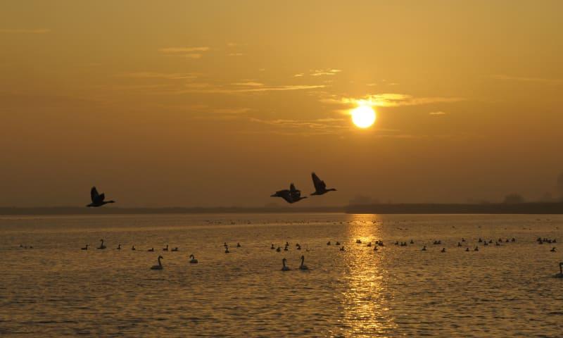 Vaar in de schemering naar Vogeleiland