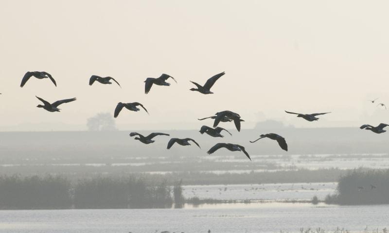 De herfsttrek van de vogels op Tiengemeten