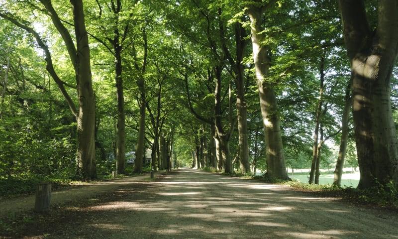 Ontdek het Corversbos bij Hilversum