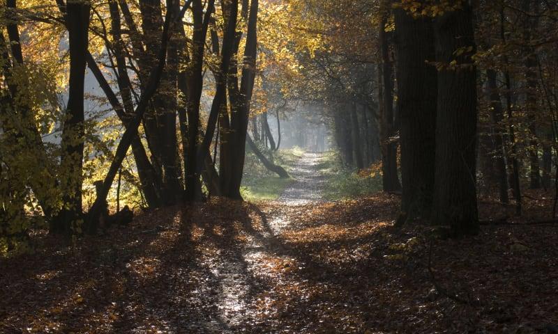 Ontdek de herfst in het Corversbos