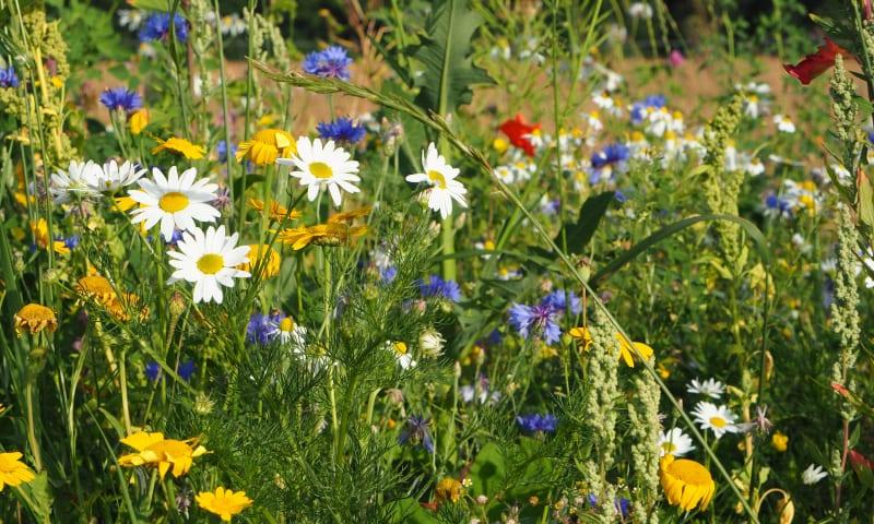 Wilde bloemenweelde