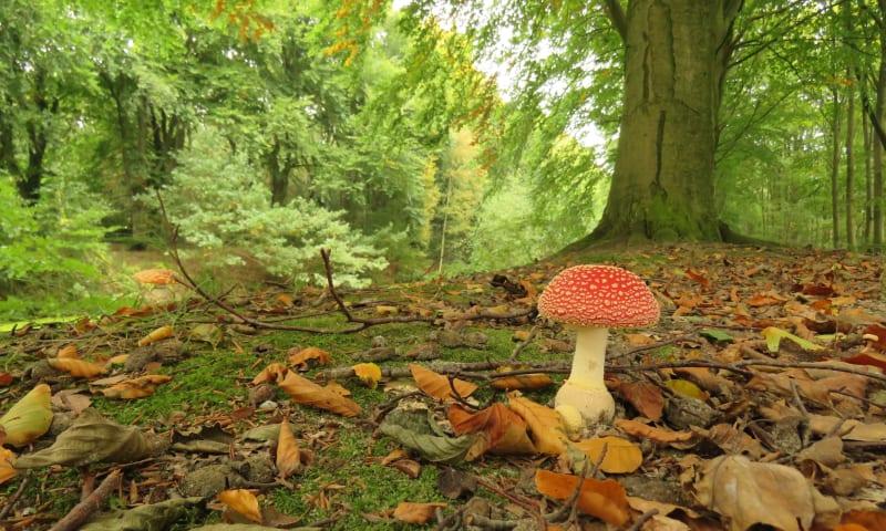 herfst in Plantloon