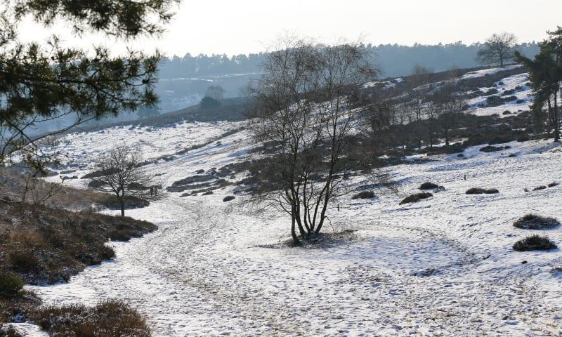 Met de gids op stap op Veluwezoom Winter