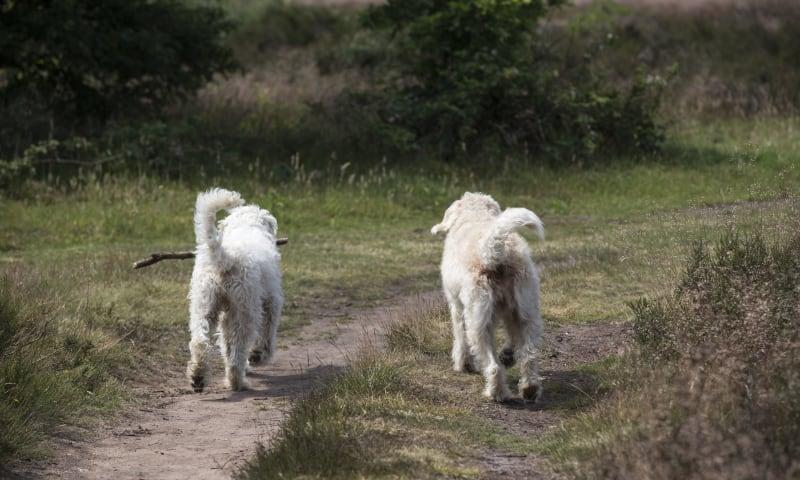 Hondenloslooproute