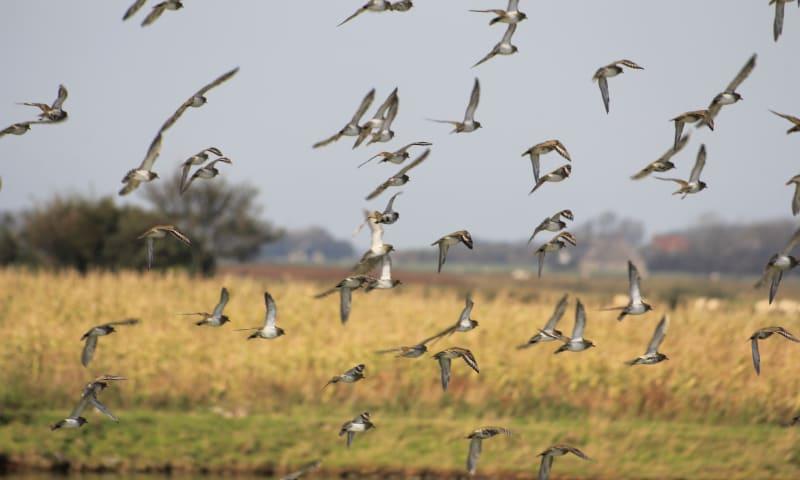 Vogels Waalenburg
