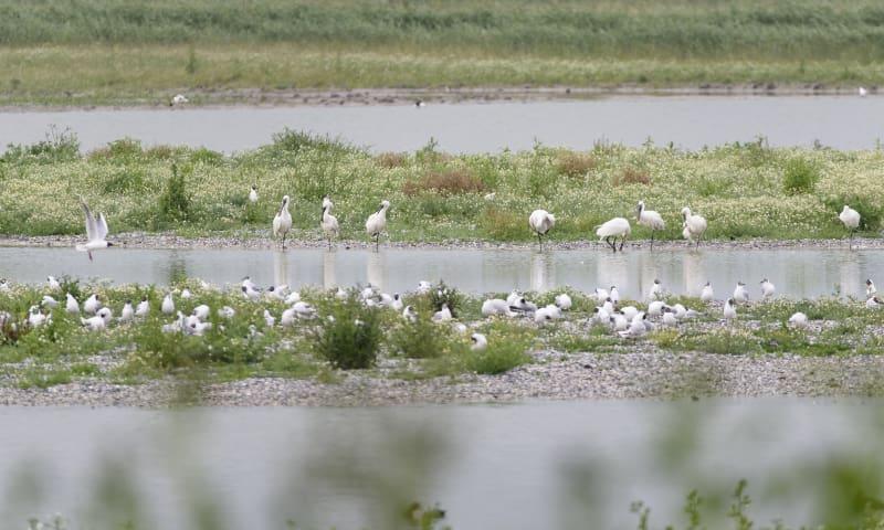 Vogels kijken in Friesland