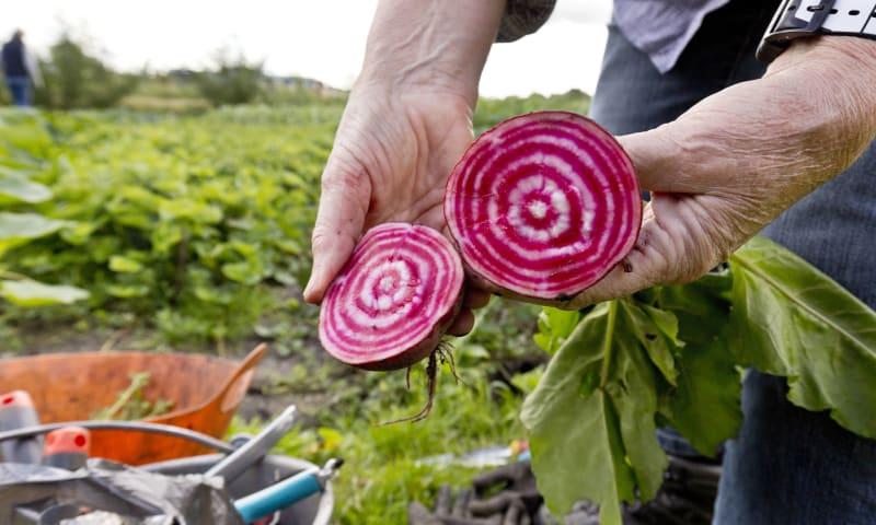 Werken in de boerenmoestuin