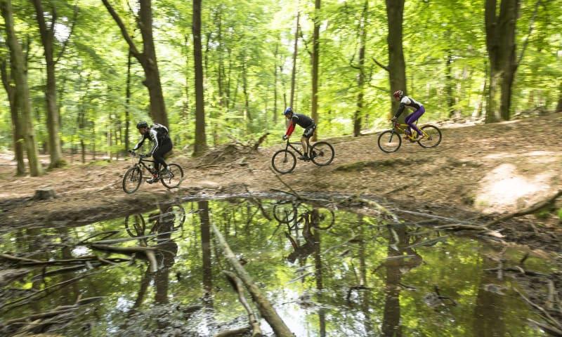 Mountainbiken Voorsterbos