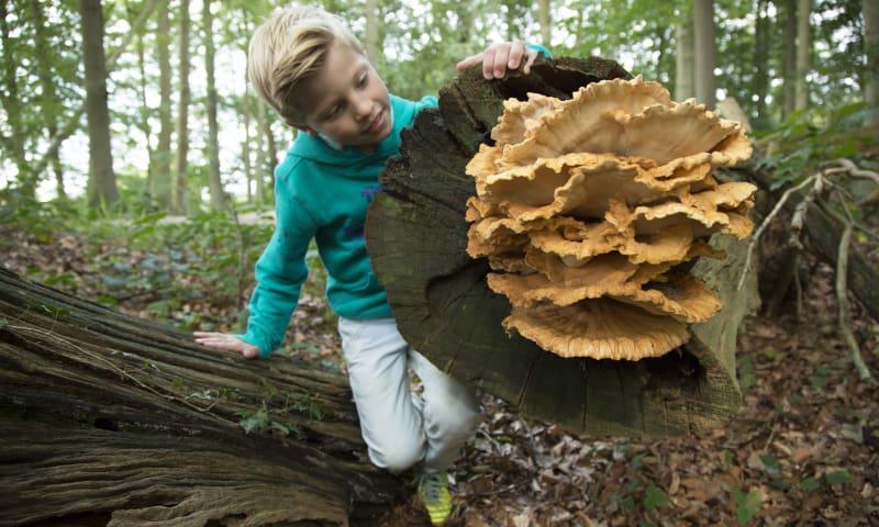 OERRR paddenstoelen - bezoekerscentrum Veluwezoom