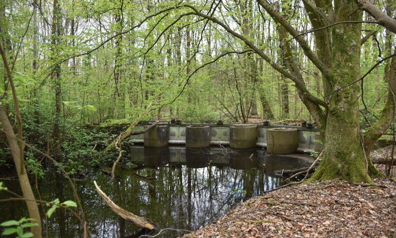 Ontdek de waterwerken in het Waterloopbos