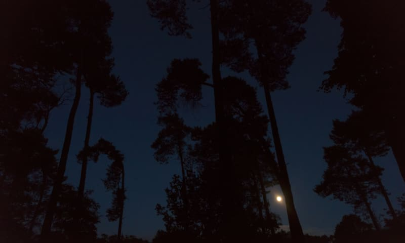 nachtelijk bos