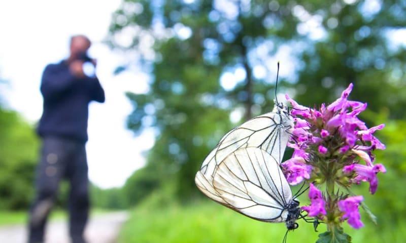 Fotograferen in de natuur
