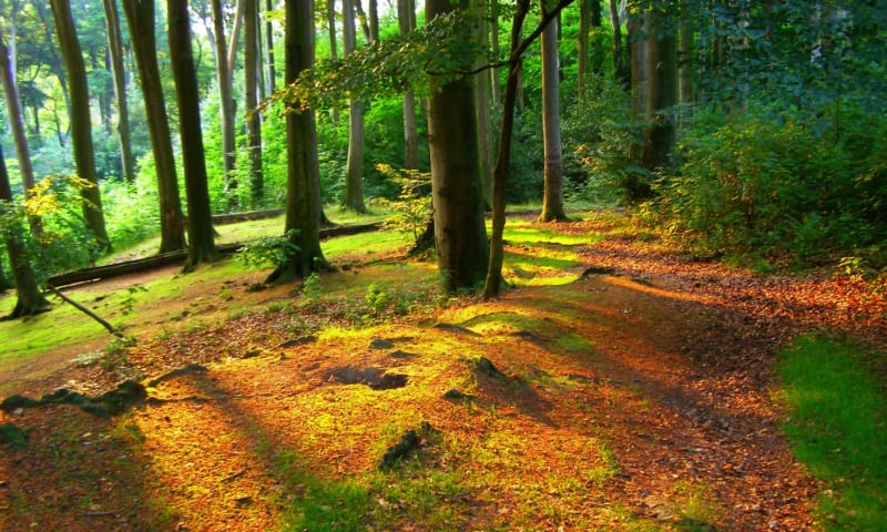 Wandelroute Imstenraderbos, bij Heerlen (geel)
