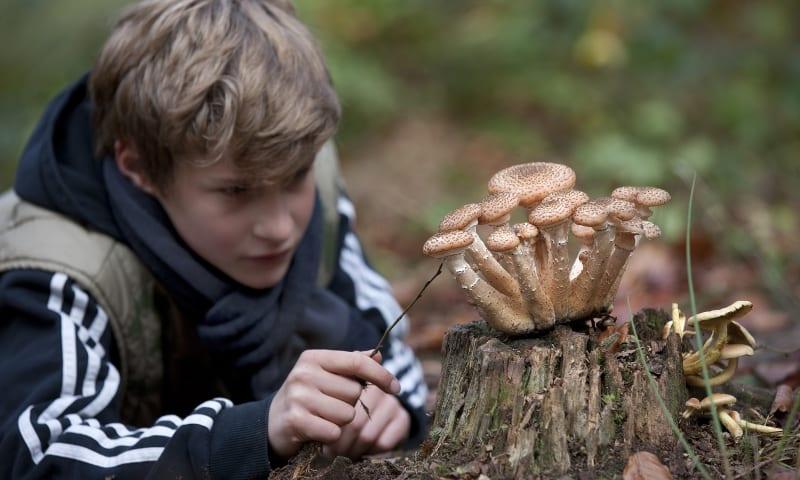 kind en paddenstoel