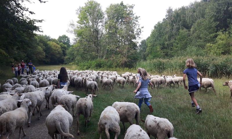 Bos en schaap