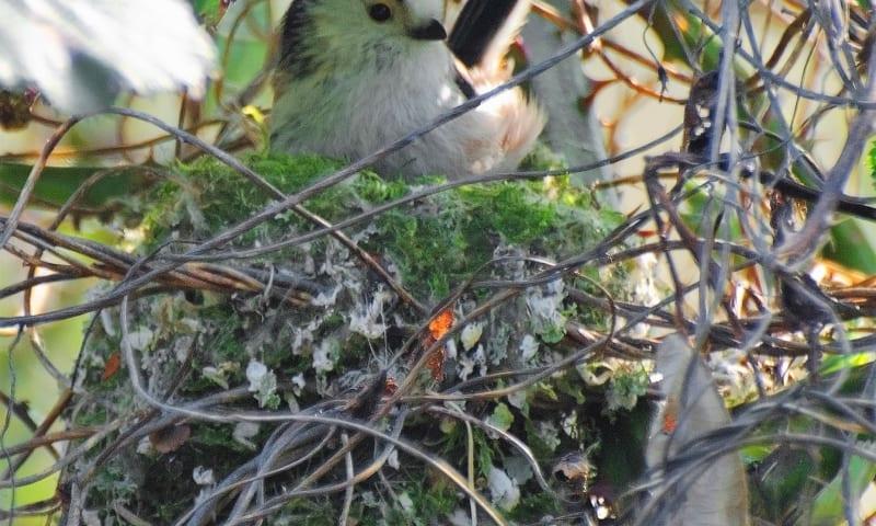Knutselen voor vogels