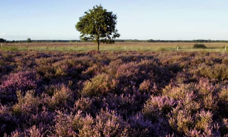 Wandelroute Nationaal Park Dwingelderveld (Drenthe)