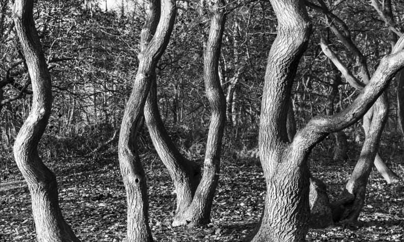Blote bomen