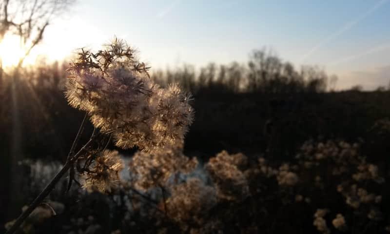 Wandeling Korenburgerveen in herfstrust