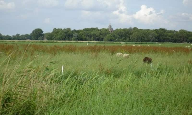 Wandelroute Biessumerbos en Voolhok (Groningen)