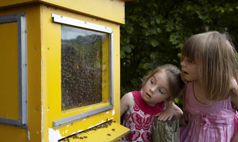 OERRR Ontmoet de huisimker en haar bijen