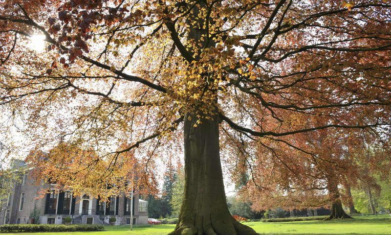Ontdek de bijzondere bomen op buitenplaats Boekesteyn in 's-Graveland
