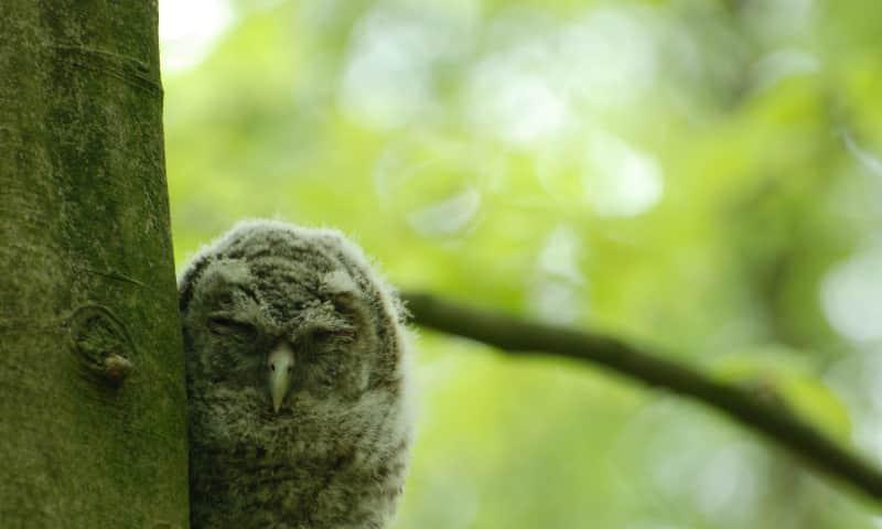 Maak kennis met de uilen van Boekesteyn