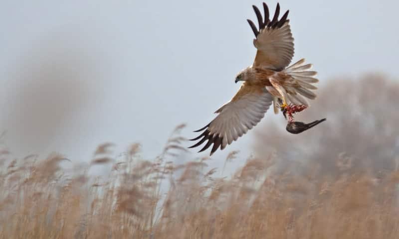 Vroege vogels in de Kwade Hoek