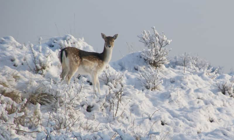 Winterse Wandeling met snert - Deelerwoud