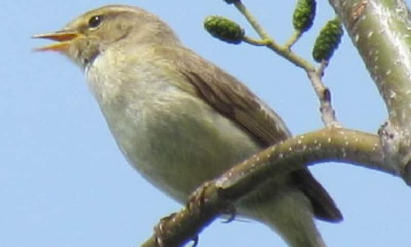 Vroege vogelwandeling, Slot Haamstede