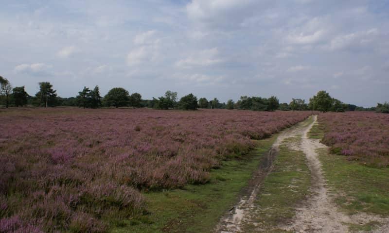 NS-wandeling Kampina en Oisterwijkse Bossen