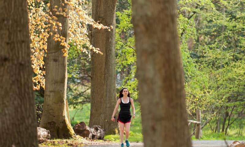 Wandelroute Parkbos Koningshof | Nationaal Park Zuid-Kennemerland