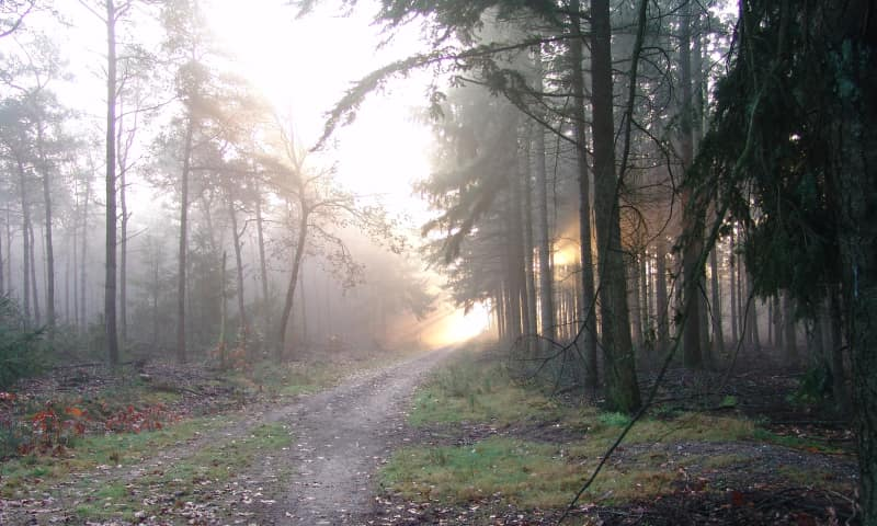 Langeboomse Bossen links meer natuurlijk bos
