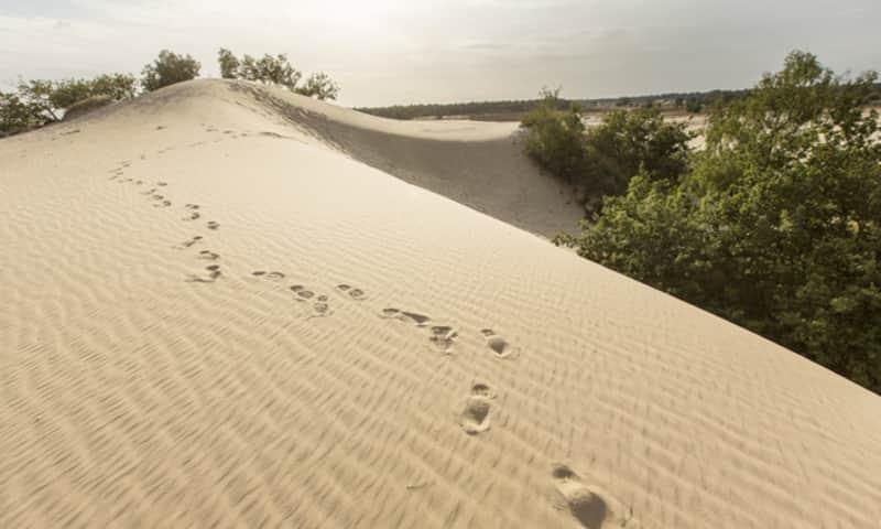 Dwars door de duinen, stevige wandeling