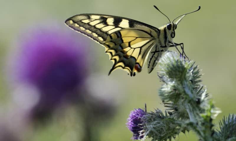 Vlinderwandeling Molenplas