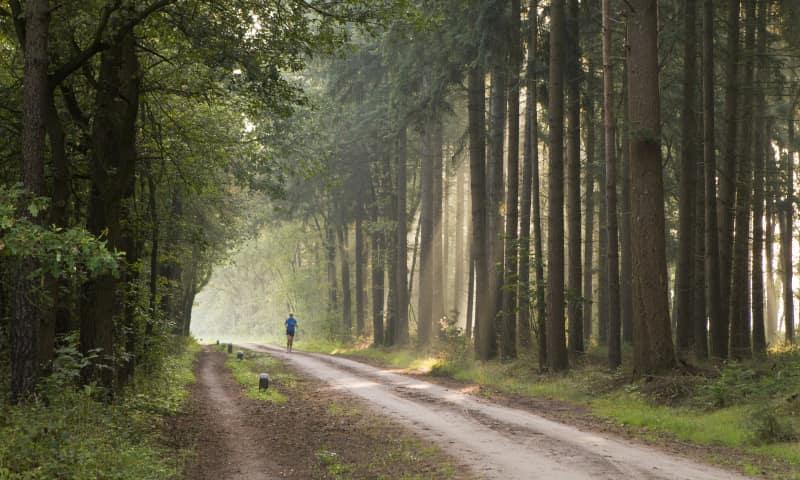 Wandelroute Mentink, vlakbij Winterswijk