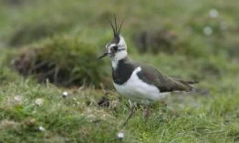 Weidevogeltocht in het Volgerland