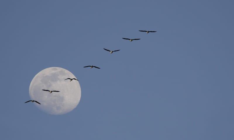 Varen naar Vogeleiland met volle maan