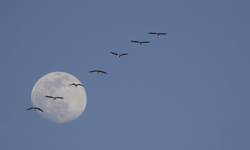 Vaartocht bij volle maan in de Nieuwkoopse Plassen