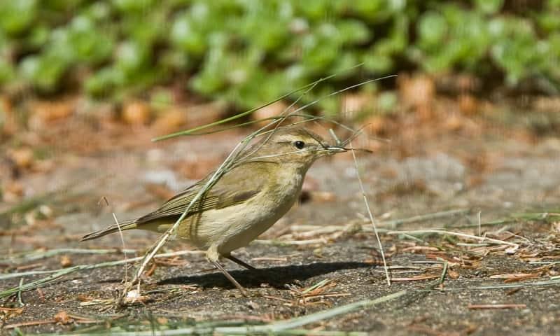 Vogel Natuurmonumenten