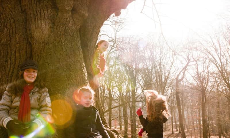 Keltische bomenroute Colckhof, bij Heino, Salland