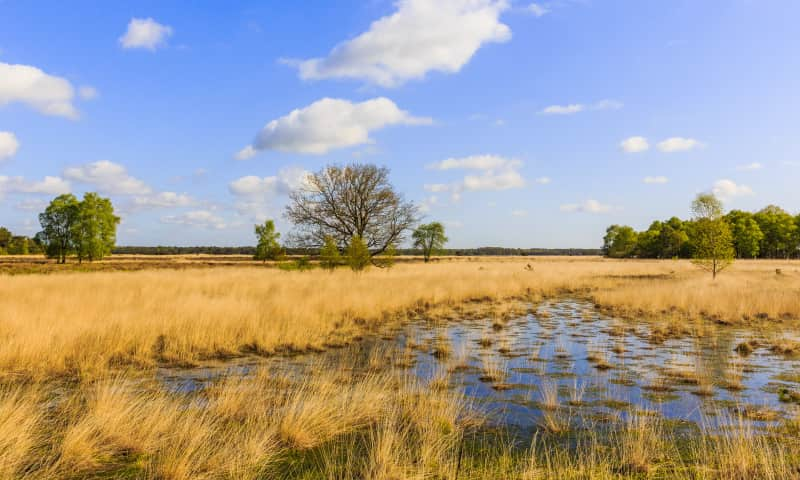 Kleurrijke Heidewandeling: Goudgele Panoramatocht