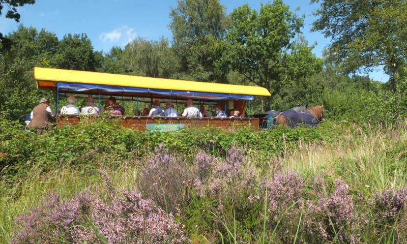 Gezinshuifkartocht bos en hei Dwingelderveld